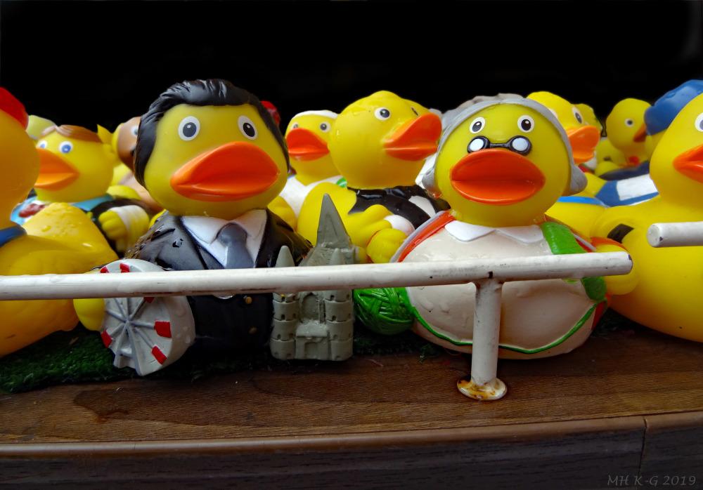 Fam. Duck