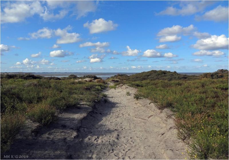 The mud flats of Oostvoorne : 2/2