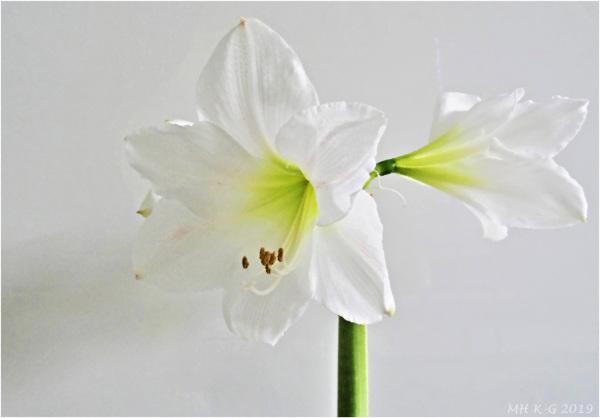 Winterflowers 1/2