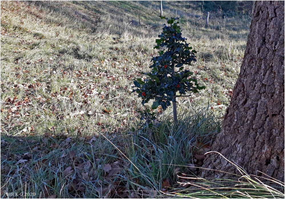 I found my Christmas tree