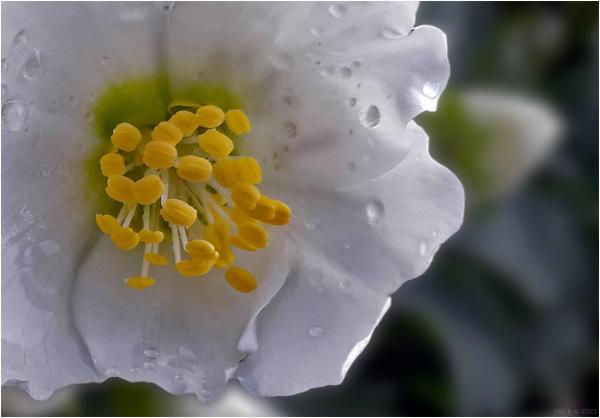 Winter bloomers (3): outside