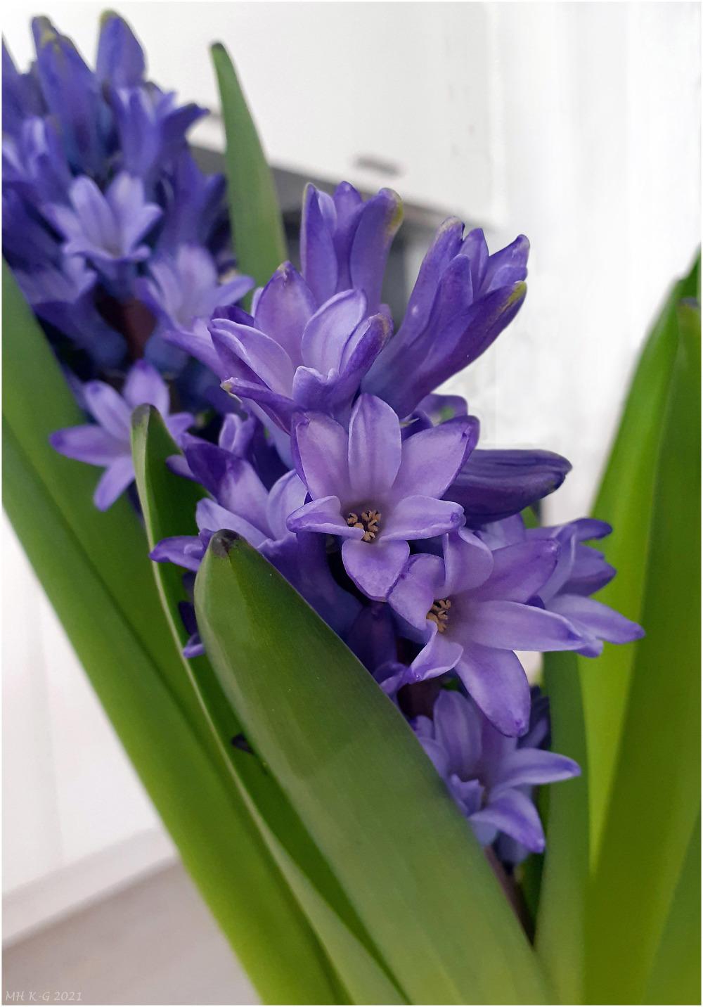 Spring in my kitchen