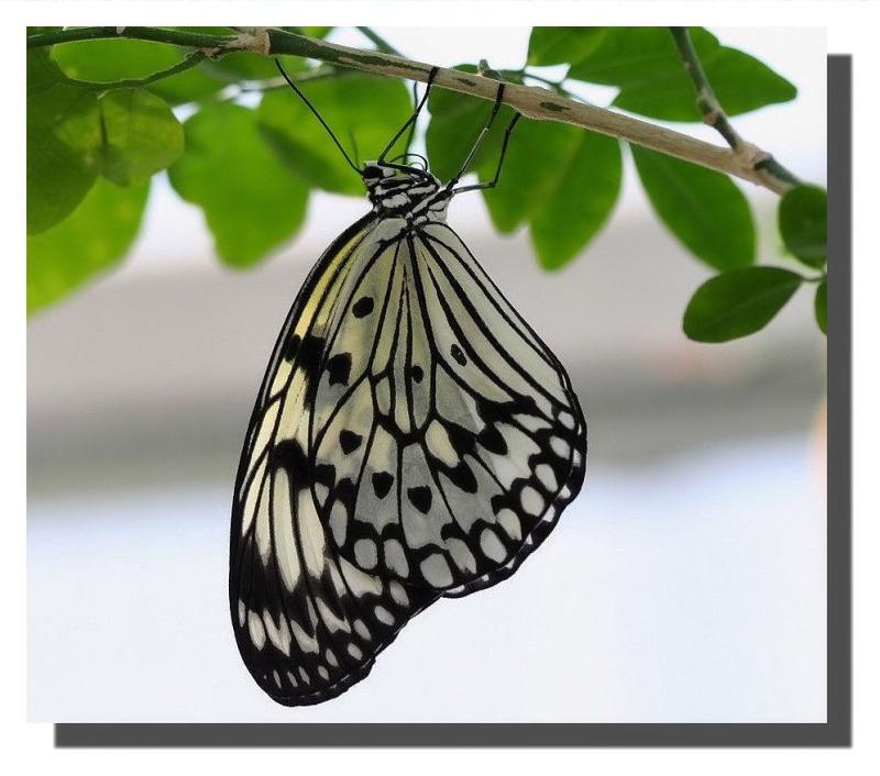 Butterfly Garden Artis Amsterdam