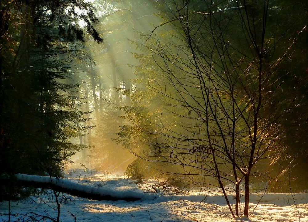 Sunrays in the forest