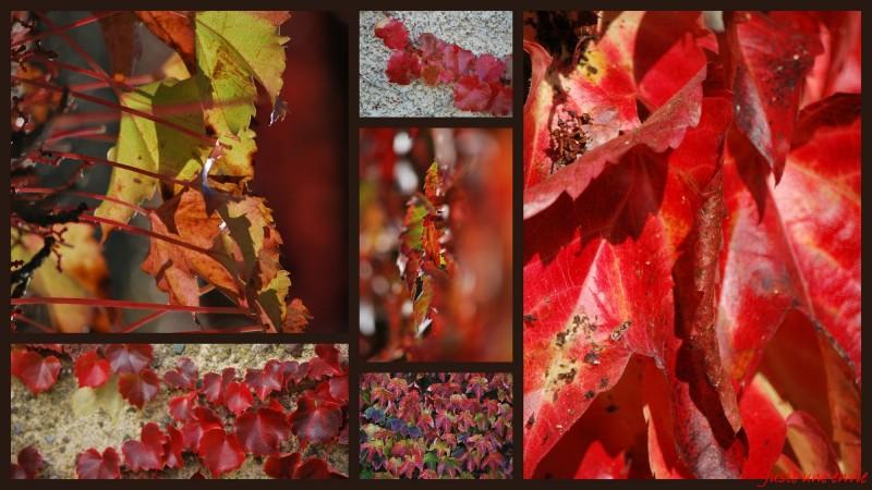 Les rouges d'automne
