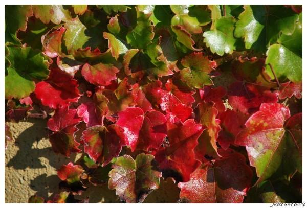 Couleur d'automne 4