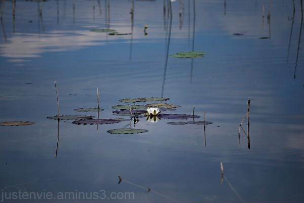 Reflets de Lac (3)