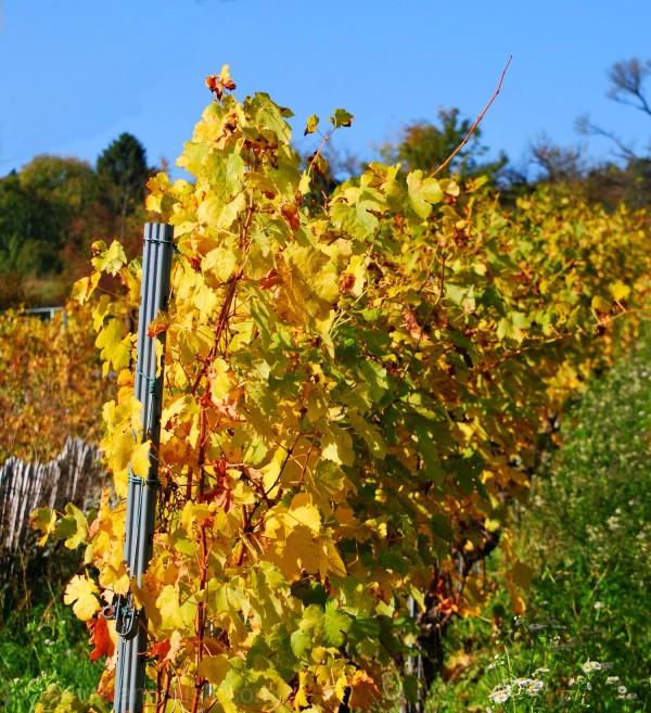 Les couleurs d'automne (4)