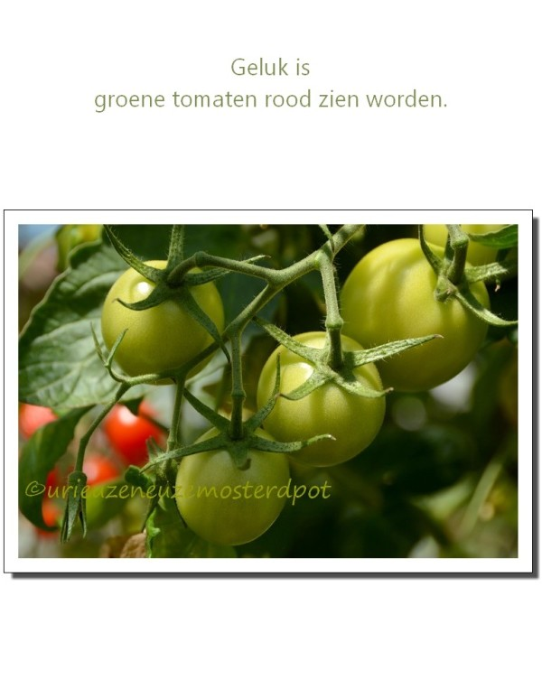 Our garden 5