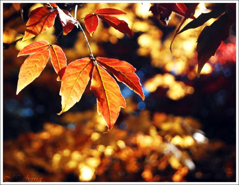 Its Autumn again