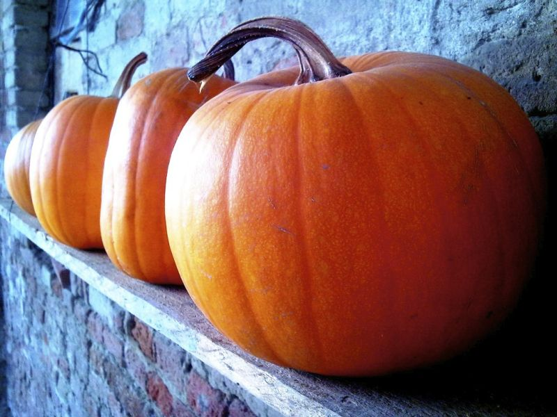 Fresh hand picked pumpkins