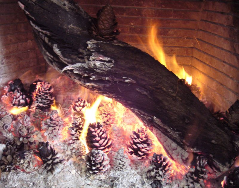 pine cone in fire