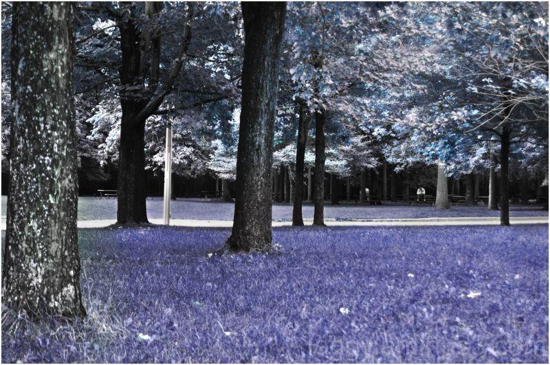 Blue, Purple, Threes, Landscape, Contrast