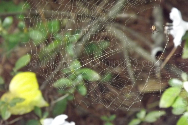 A new spider web