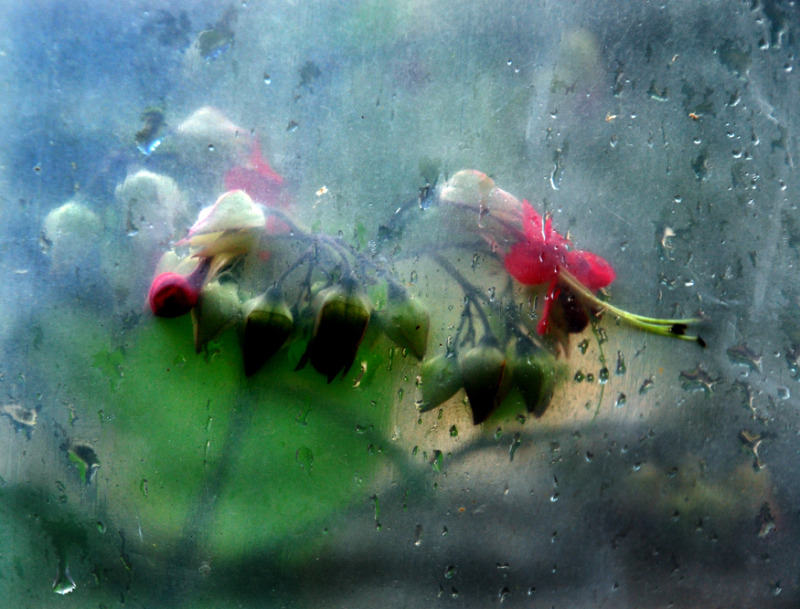 rain beauty
