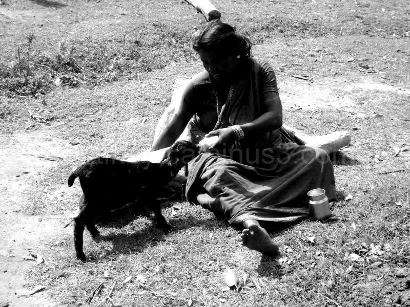 A woman feeds an orphaned goat kid milk