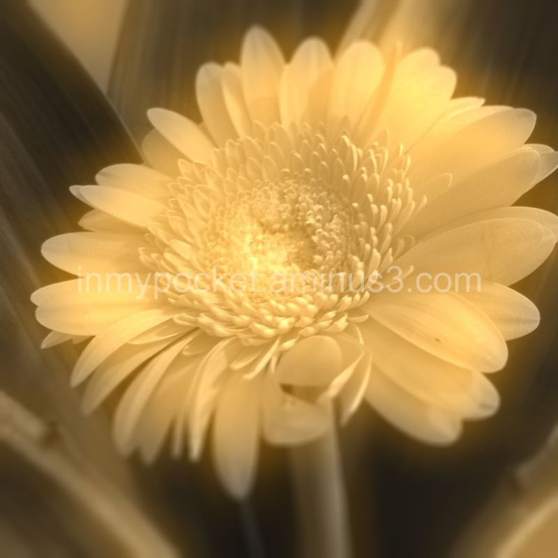 soft focus paled flower