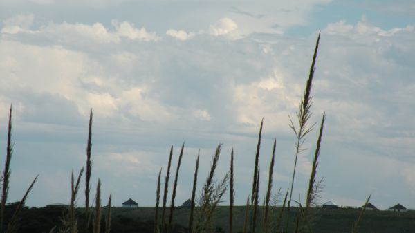 Grasses on the Transkei Hills