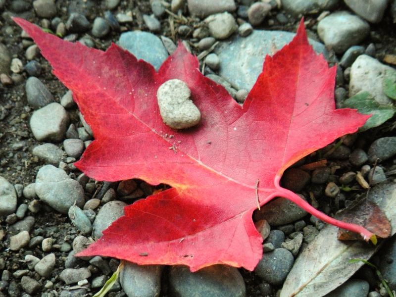 Maple Leaf on Driveway