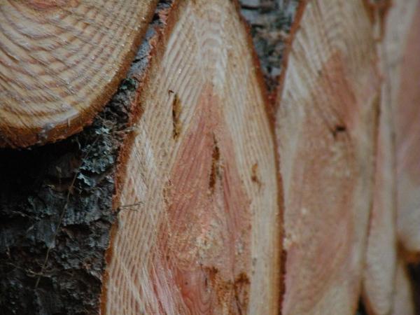 Just Firewood