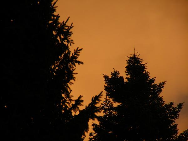 Firry Sunset