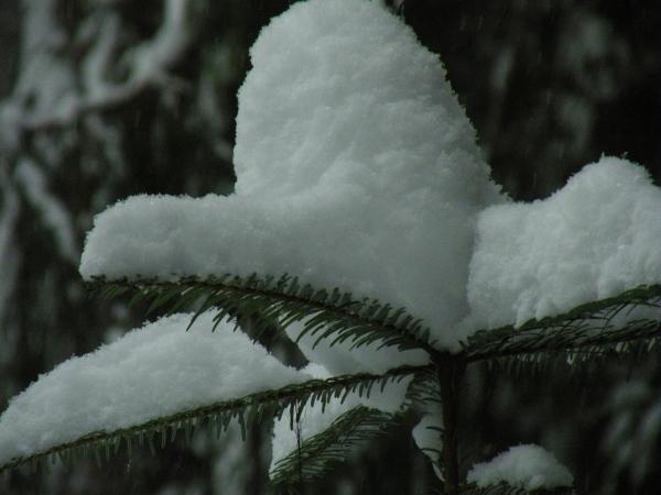 Grand Snow Cap