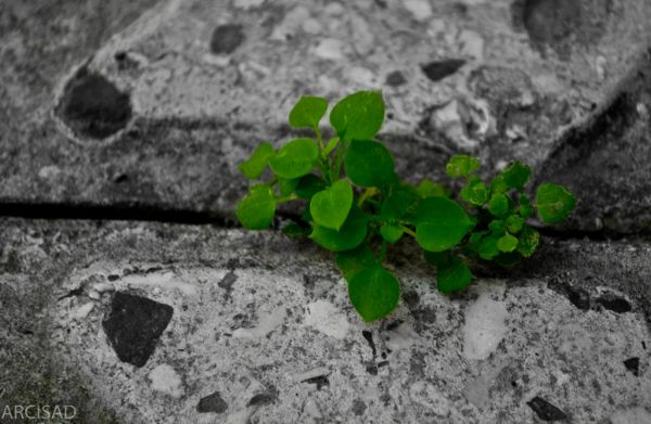 Life is everywhere!
