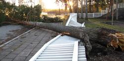 Kaatunut puu, fallen tree