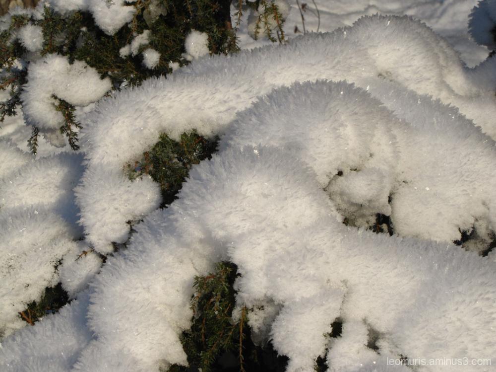 talvikuva - wintery picture