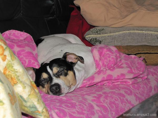 Nukkuva koira - Sleeping dog