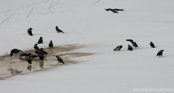 Varisparvi - Crow Loft.