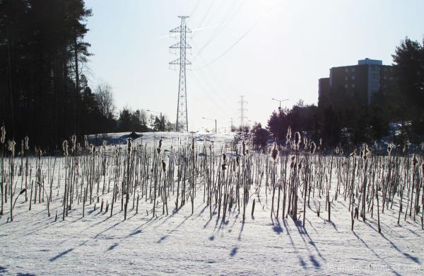 Talvinen päivä - The wintery day