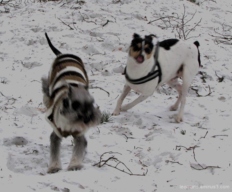 Iloiset koirat - happy dogs