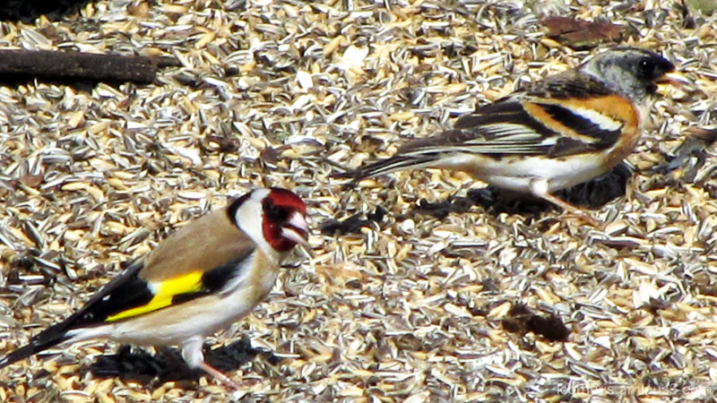 Kirjavat linnut - Colorful birds.