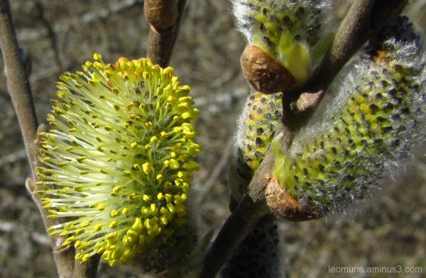 Kukka - Flower
