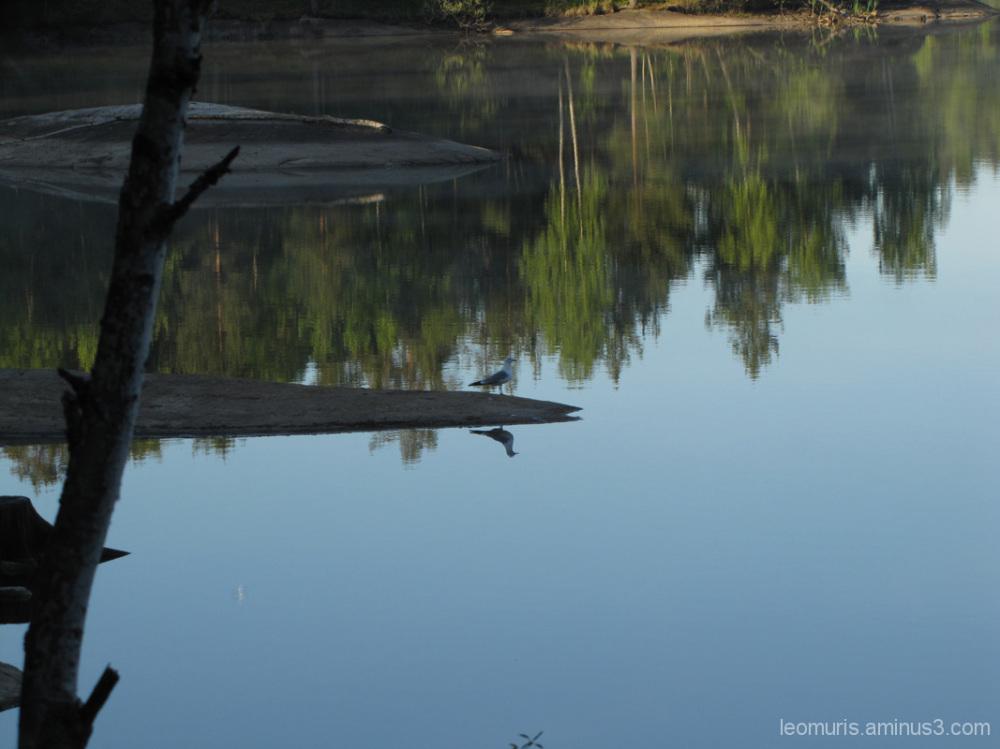 Heijastuksia - reflections
