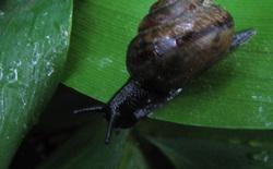 Etana - snail