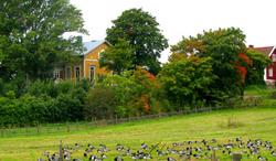 Maatalo - Farm