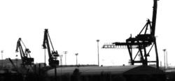 Nostureita - cranes