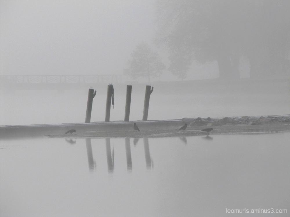 Usvainen maisema - misty landscape