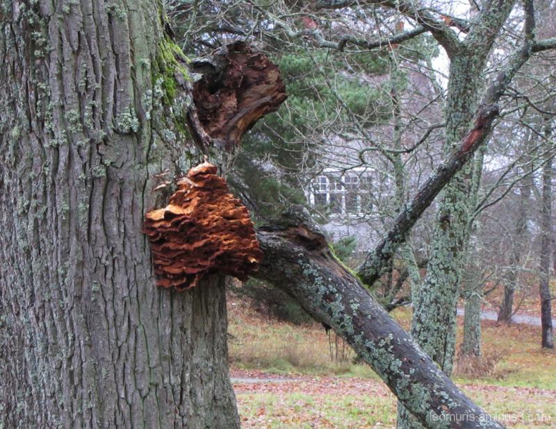 Katkennut oksa - A broken branch