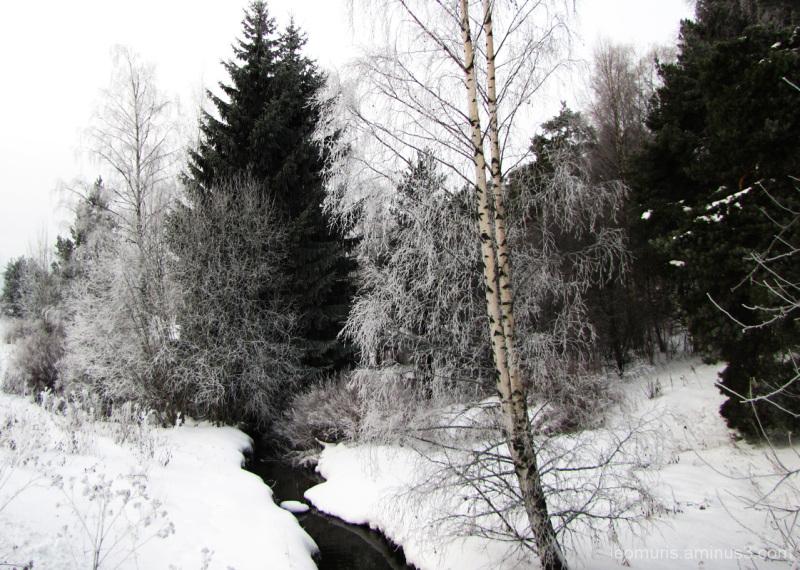 Talvi - Winter