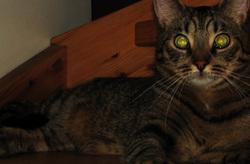 Kissa - Cat