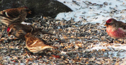 Muutama lintu - Few birds