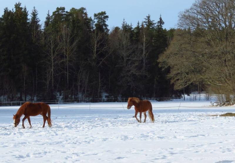 Kaksi hevosta - Two Horses