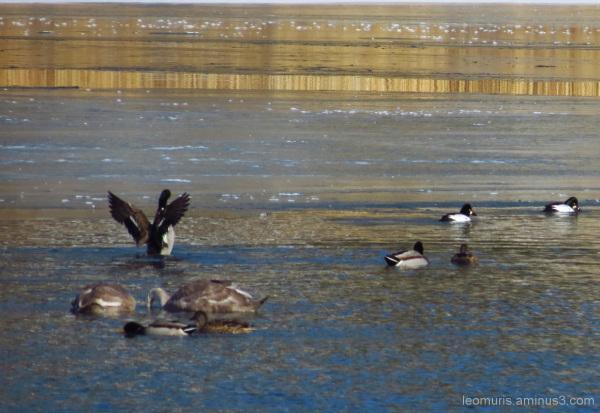 Lintuja ja siipiä - The birds and the wings