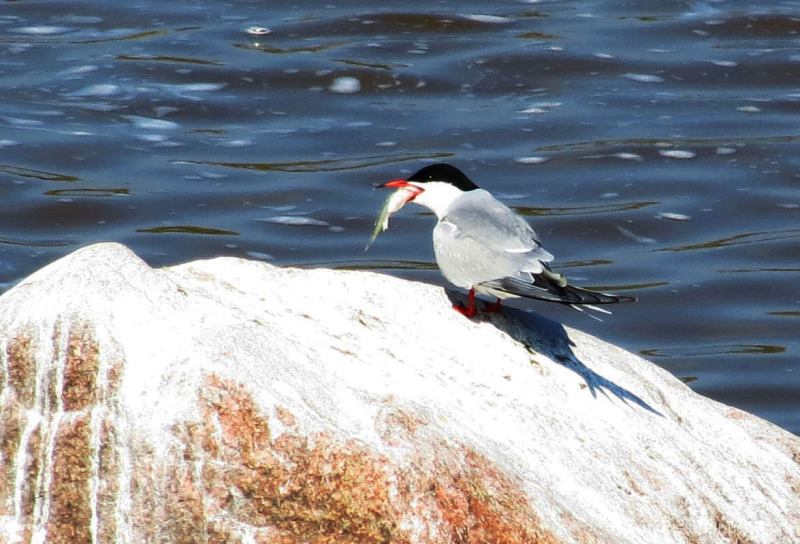 Lintu syö - The bird is eating