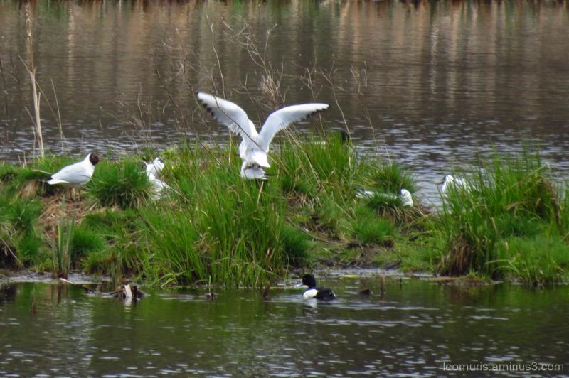Lintuja - Birds