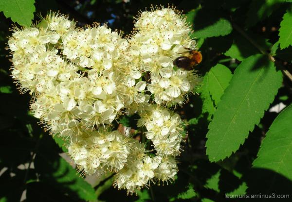 Kukat ja kärpänen - Flowers and fly