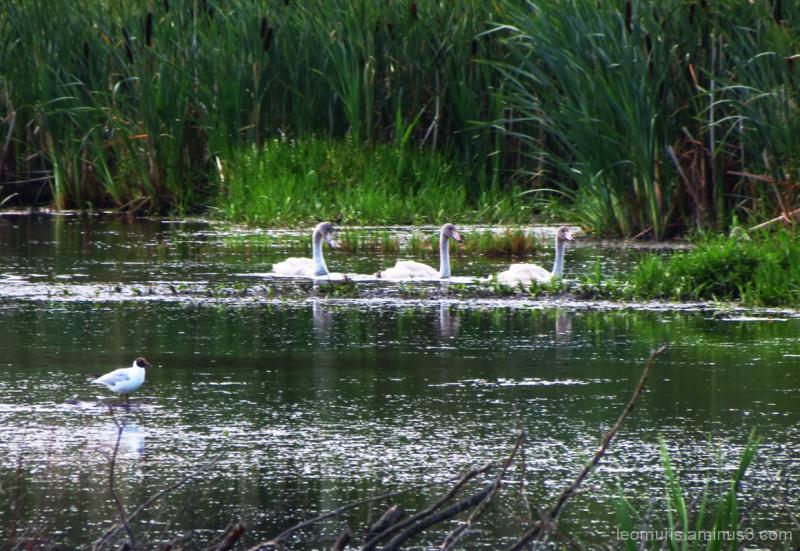 Pieni perhe - Small family